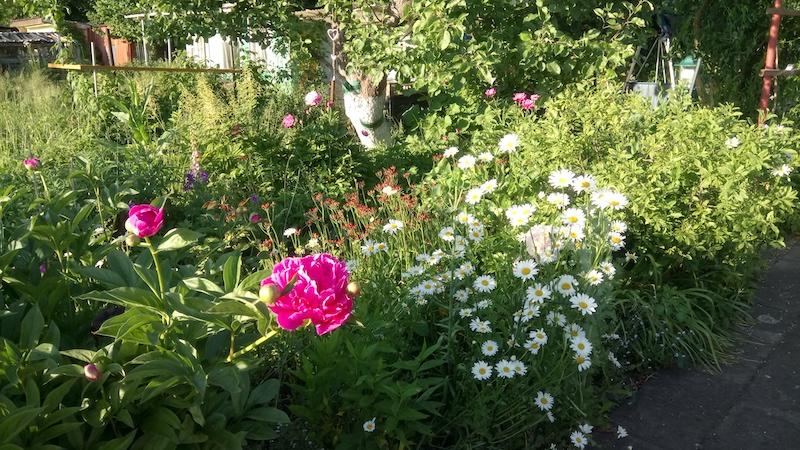 Blick in den sommerlichen Garten von Katja Voigt aus Neubrandenburg