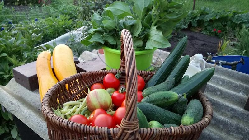 Den ganzen Sommer über folgt der Lohn für die Arbeit im Kleingarten: eine umfangreiche Ernte. Manche Hobbygärtnerinnen wie Katja Voigt aus Neubrandenburg reichen mit selbst angebautem Gemüse bis weit ins nächste Frühjahr hinein.
