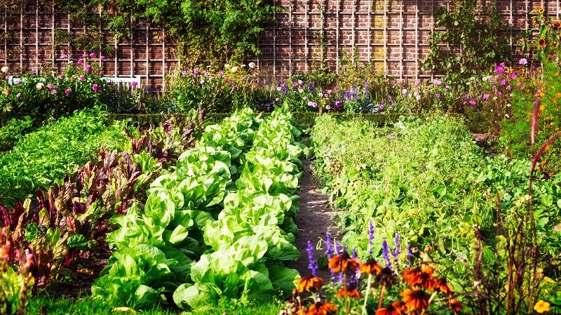 Blick auf die Gemüsebeete im Kleingarten Foto: © Irina Fischer - stock.adobe.com
