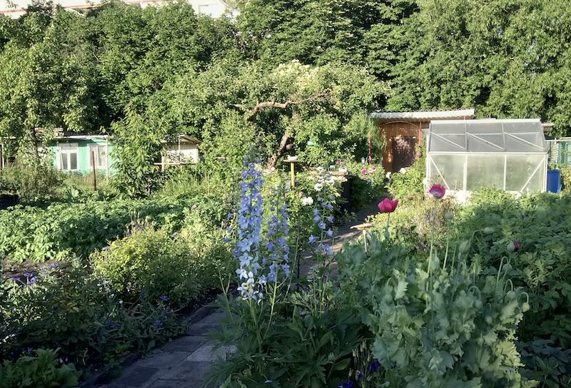 Blick in den sommerlichen Garten - eine üppig grüne und blühende Oase.
